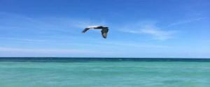 Ave volando sobre la playa de Varadero