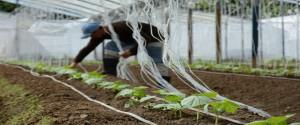 Relevantes resultados de la ciencia en Camagüey al cierre de 2019