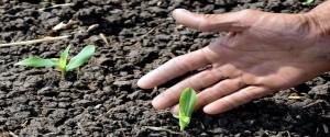Inicia en Villa Clara proyecto agrícola con apoyo de la Unión Europea