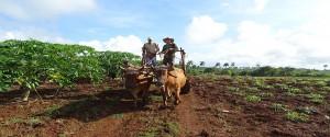 Fomentan la agroecología en polo productivo de San Antonio, en Camagüey