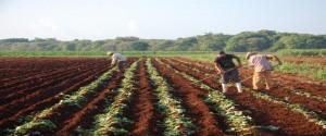 La agricultura libra su propia batalla contra el virus