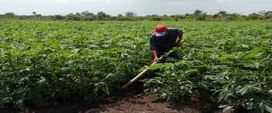 La ciencia y la innovación aplicada a la agricultura es una triada que avanza mucho más rápido si va de la mano del gobierno (Rodolfo Blanco Cue / ACN)