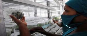 Hay en marcha de 23 programas de desarrollo agropecuario. Foto: ACN.