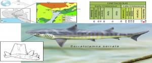 Especie extinta de tiburón (Serratolamna serrata)