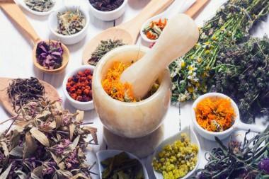 Plantas medicinales beneficiosas para la salud producidas en Ciego de Ávila