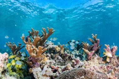 Escena de arrecife submarino que muestra corales duros y bancos de peces tropicales en aguas poco profundas, jardines de las reinas, Cuba