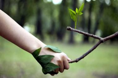 Foto alegórica al cuidado del medio ambiente