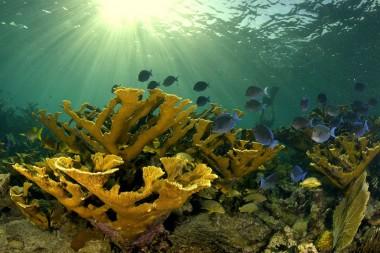 Consolidan acciones en Camagüey para la conservación de corales y arrecifes