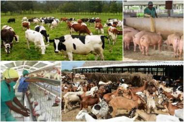 Producción animal en Cuba