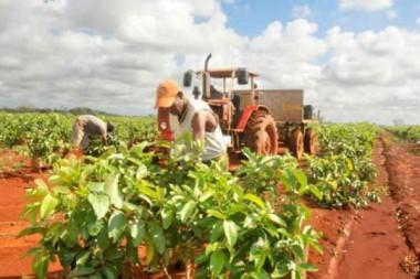Cuba busca alternativas para enfrentar bloqueo de Estados Unidos en agricultura