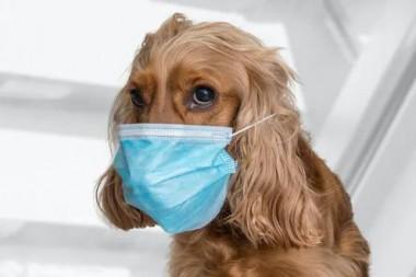 Perro con nasobuco