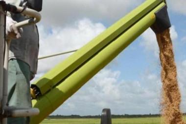 Proponen desde la ciencia soluciones para la producción de arroz y frijoles  Proponen desde la ciencia soluciones para la producción de arroz y frijoles