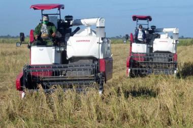 La certificación de semillas de arroz resistentes a condiciones adversas y su empleo a gran escala, sobresalen entre los resultados de la provincia. Foto: Ronald Suárez Rivas