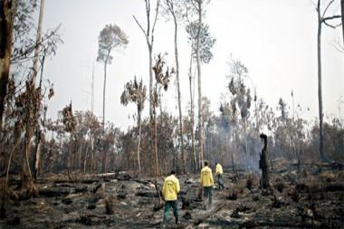 El bosque amazónico, según expertos, va camino a convertirse en una sabana en las próximas décadas. Foto: Reuters.