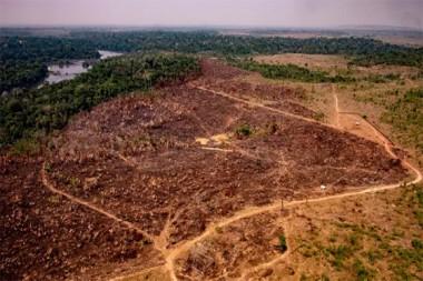 Deforestación en la Amazonia brasileña. Foto: Getty Images.