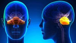 Ataxias cerebelosas e infecciones virales
