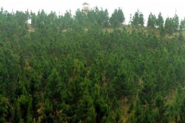 El 48,7% de la superficie de Pinar del Río, una de las provincias con mayor índice de boscosidad, está cubierta de árboles Foto: Ronald Suárez Rivas