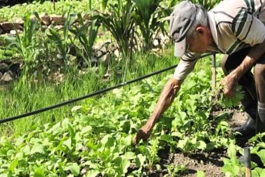 Persona trabajando enPersona trabajando en el campo el campo